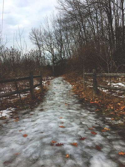 Adventure Wander Pathway Path Bare Tree Tree Nature Tranquility Tranquil Scene Winter No People Landscape Sky Outdoors Beauty In Nature Scenics Cold Temperature Snow Day Cloud - Sky Water Shades Of Winter EyeEmNewHere
