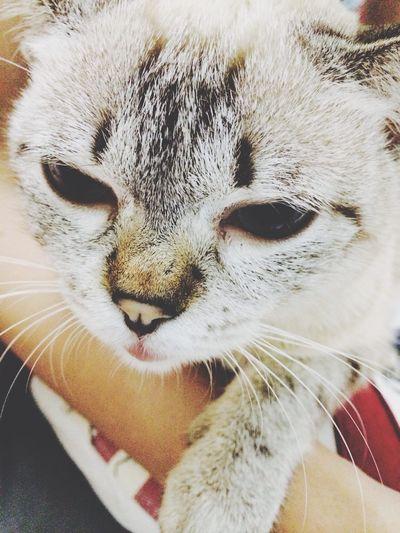 Kitty resting on egi's hand~ Cat, Cute
