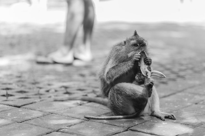 Mother and child Animal Themes Animals In The Wild Baby Animals Baby Monkey Black And White Photography Eating Monkey Mother And Child Nature Travel Wildlife Wildlife & Nature Wildlife Photography Black And White Friday This Is Family Visual Creativity Love Is Love