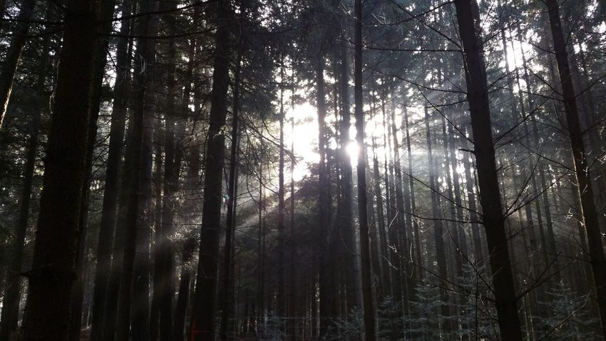 Perfect Picture my think! Tree Nature Sunlight Beauty In Nature Forest No People Outdoors Sky Day People Are People Enjoying Life Globalworld Wonderful Enjoy Your Life Globalwatching Nature Food Beauty In Nature Landscape_Collection Ullrich Huber Wundervoll Taking Photos Traumhaft WoodLand Growth