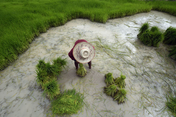 High angle view of farmer working in shallow water on field