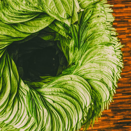 Beauty In Nature Close-up Day Freshness Green Color Indoors  Leaf Nature Piperbetle