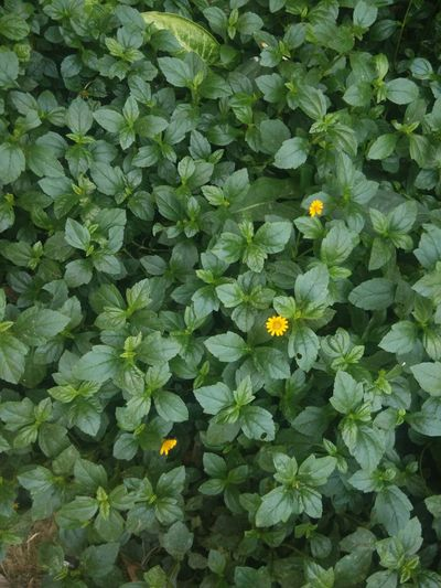 Green Color Growth Nature Beauty In Nature Leaf Freshness Plant Fragility Flower No People Outdoors Day Backgrounds Flower Head