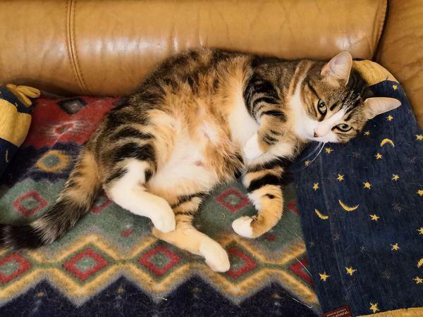 EyeEm Selects Pets Feline Relaxation Domestic Cat Lying Down Sleeping Comfortable Eyes Closed  Resting Sofa