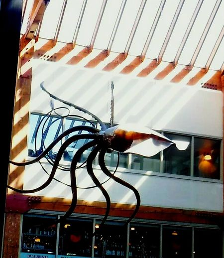 Colour Of Life Color Palette Light And Shadow Giant Squid Octopus Hello World Taking Photos Best Of EyeEm EyeEm Gallery