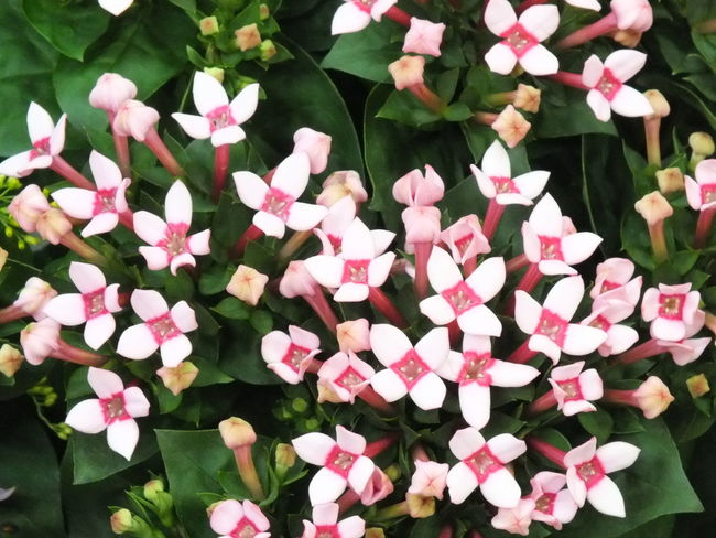 """""""ブバリア"""" Flower Flowers Cute♡ Beautiful Flowerporn Flower"""
