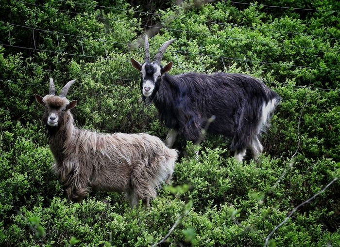 Wild mountain goats rock. The Places I've Been Today In The Forest Forest Playing With The Animals Nature On Your Doorstep