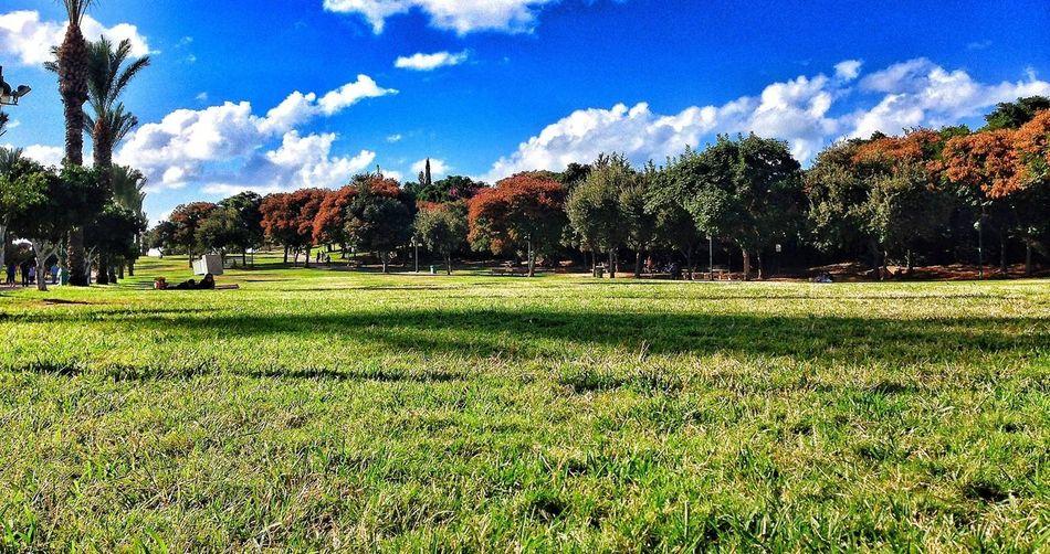 Nature_collection EyeEm Best Shots Trees EyeEm Best Edits photography Erez Ben Moshe