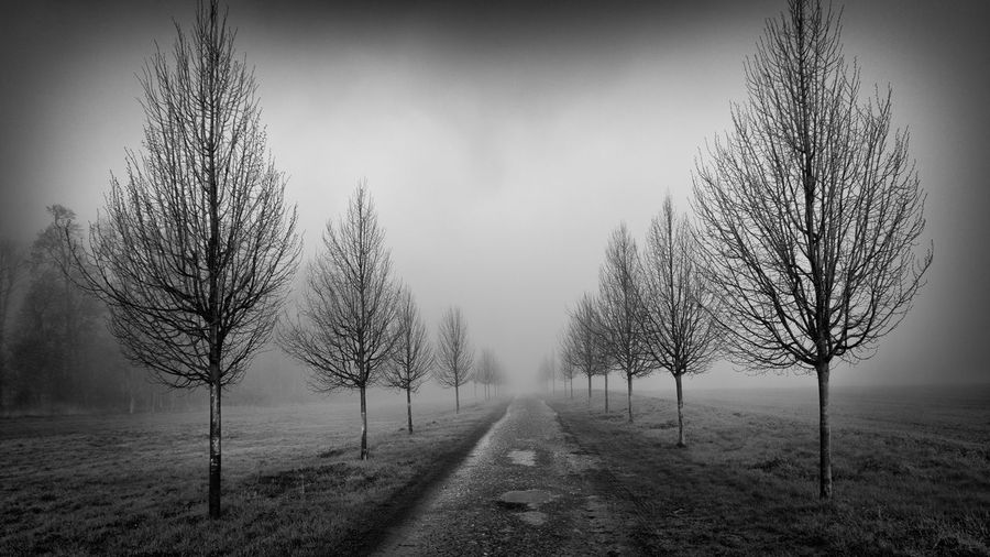 Beauty In Nature Fog Land Landscape Nature No People Outdoors Scenics - Nature Tranquil Scene Tranquility Tree Treelined