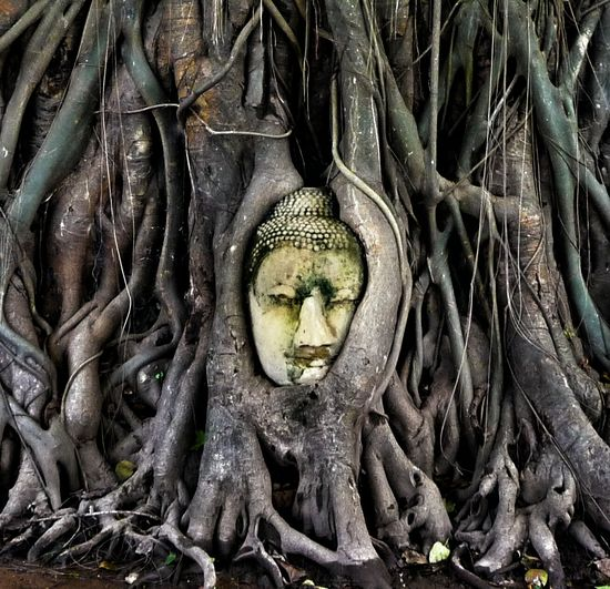 Buddha sculpture amidst tree at ayuthaya province