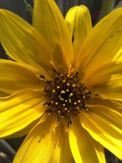 Close-up of yellow flower