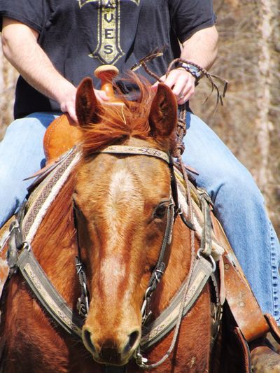 Cowboy up 💪 Horses Horse Riding Cowboy Cowboy Up Country Quarterhorse Horse Photography