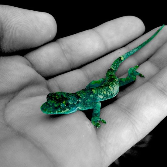 """"""":-:( S U P Σ Γ Σ D I T ):-:"""" Colorsplash Lizard Darkness And Light Nature Nature_collection Hand Gecko Hue Change Superedit Open Edit"""