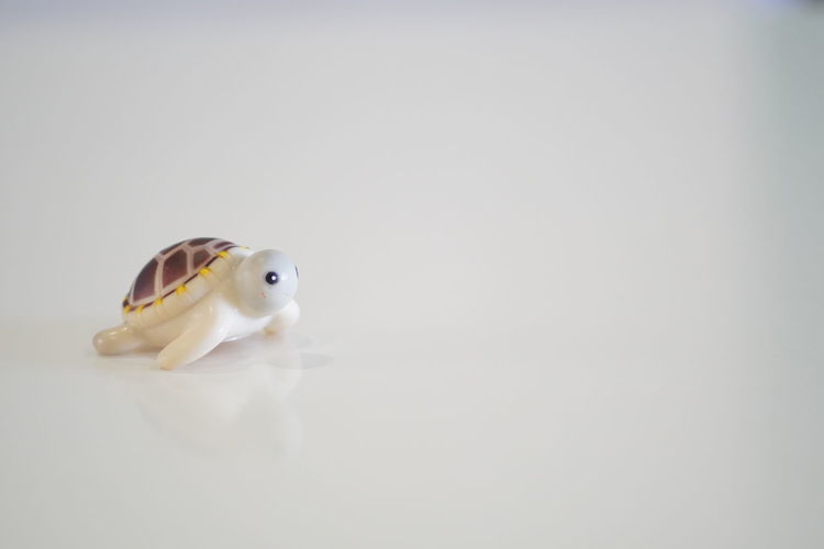 High angle view of a stuffed toy over white background