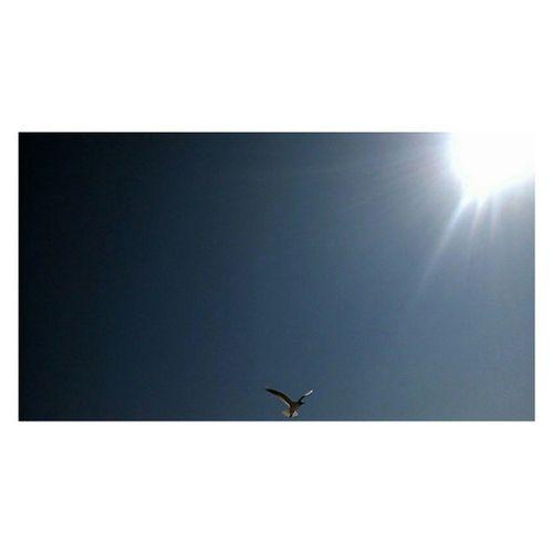 """(Fortunata) si allontanava battendo le ali con energia fino a sorvolare le gru del porto, gli alberi delle barche, e subito dopo tornava indietro planando, girando più volte attorno al campanile della chiesa. """"Volo! Zorba! So volare!"""" strideva euforica dal vasto cielo grigio. L'umano accarezzò il dorso del gatto. """"Bene, gatto. Ci siamo riusciti"""" disse sospirando. """"Sì, sull' orlo del baratro ha capito la cosa più importante"""" miagolò Zorba. """"Ah sì? E cosa ha capito?"""" chiese l'umano. """"Che vola solo chi osa farlo"""" miagolò Zorba. (Luis Sepùlveda, Storia di una gabbianella e del gatto che le insegnò a volare) Ph: @jan.can Buonanotte amici... <3 Buenasnoches Bonnenuit Goodnight Bari luissepulveda quote libro aforismi gabbiano sole gull bird animal seagull sun nature sky gaviota sol apulia puglia bestofbari dettaglidibari vivopuglia vivoitalia puglia_city loves_puglia natural_flash"""