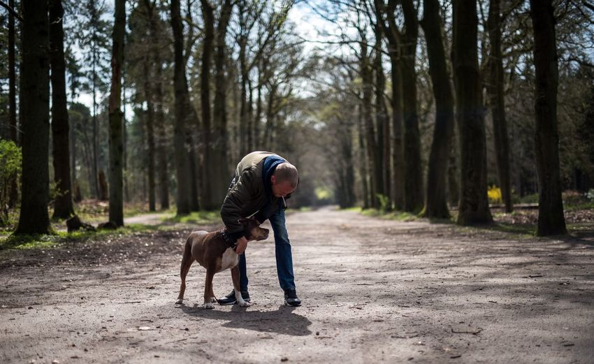 Mid Adult Man With Dog Standing On Footpath In Forest
