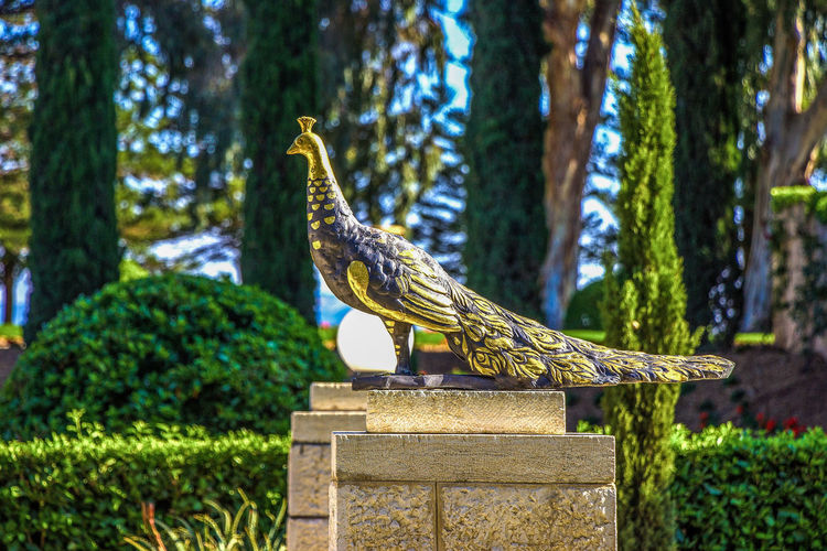 gilded statue of a peacock in the temple of Bahai in Acre, Israel. Bahai Close-up Day Entertainment Gilded Gold History Israel Metal No People Park Peacock Religion Sculpture Statue Temple Tourism Travel