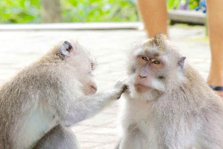 Two Animals Animal Themes Togetherness Care Animal Head  Focus On Foreground Capture The Moment Monkey Monkyface