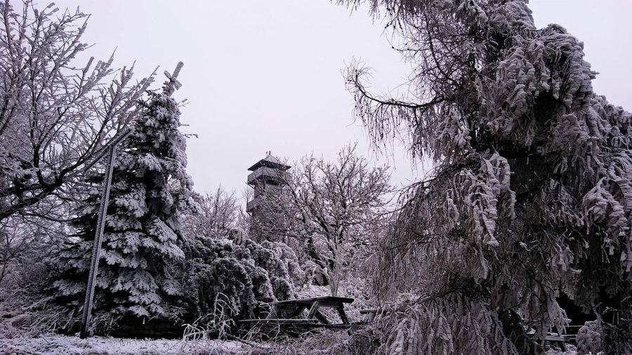 Lookout tower in frozen forest Tree Nature No People Architecture Outdoors Winter Frozen Lookout Tower Forest Winter Snow Cold Temperature Cold December Czech