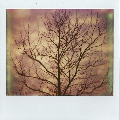 PINK SKY Impossible Impossibleproject Imagesystem Polaroid