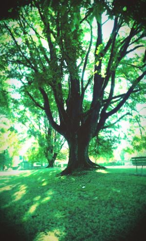 Green Fire Soullessphotography Phoneography EyeEm EyeEm Best Shots - Nature TreePorn Retrica