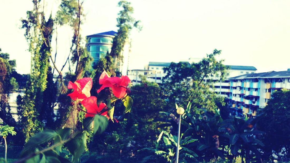 Bougainvillea Flower Scenery Apartment EyeEmNewHere