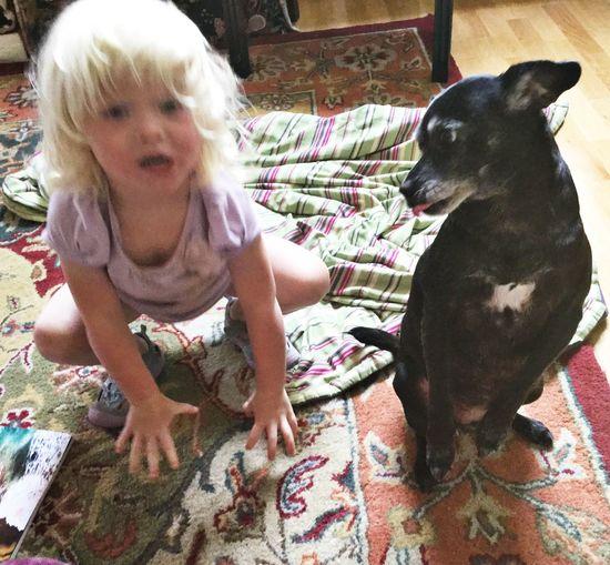 Child Dog Cute Playful Dog Yoga Indoors  Home Colourful Home Little Girl Blond Hair Blonde Girl 3 Year Old Girl Santa Rosa CA
