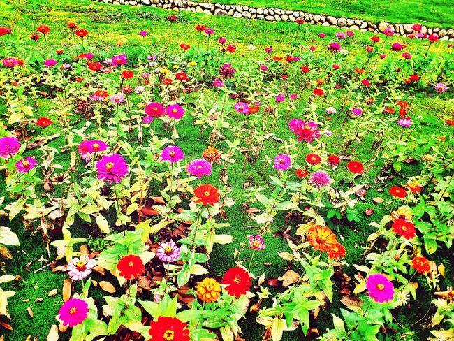 丘紅谷 Flowers