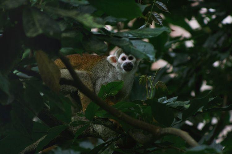 Portrait of a monkey on tree
