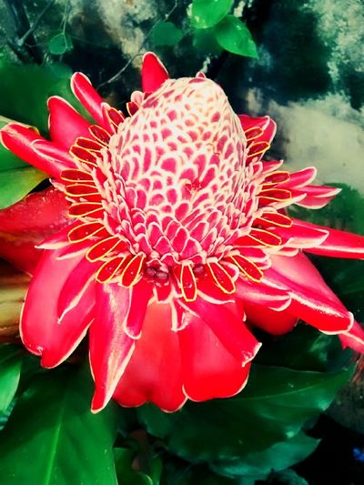 Bastaodoimperador Red Flower Nature Photography Flowers,Plants & Garden Red