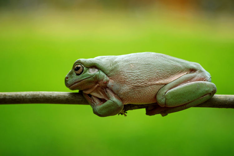 Tree frog perch