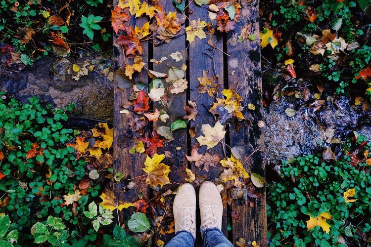 Leaf Autumn Change Low Section Nature Outdoors Human Leg Day Shoe One Person Human Body Part High Angle View Real People Directly Above Standing Beauty In Nature Close-up One Man Only Leaves Nature Legs Autumn Colors Autumn Leaves Autumn Collection Autumn 2017 Perspectives On Nature