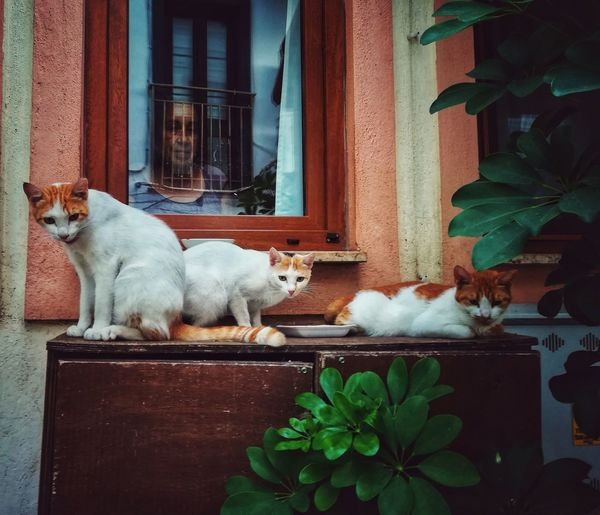 compassion.. Pets Sitting Domestic Cat Doorway Window Box Window Door House Full Length Feline Window Sill Potted Plant Succulent Plant Flower Pot Cat Ginger Cat