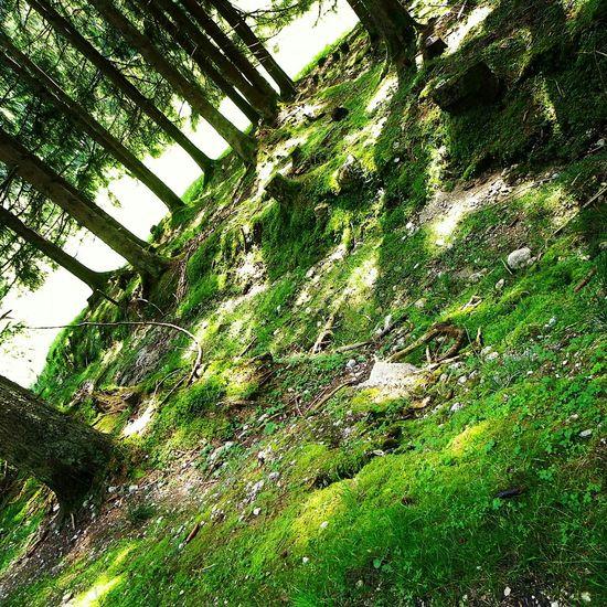 Spaziergang im Wald. 🌲🌳 Forrest Forrest Photography Photography_by_michelle Spaziergang Amazing Green Beautiful Baum Genießen