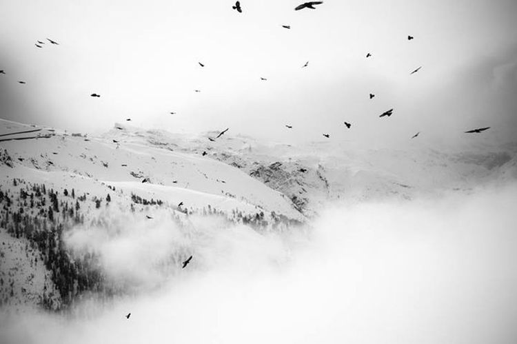 birds of zermatt Birds Zermatt Switzerland Schweiz Winter Wintertime VSCO Fuji Neopan