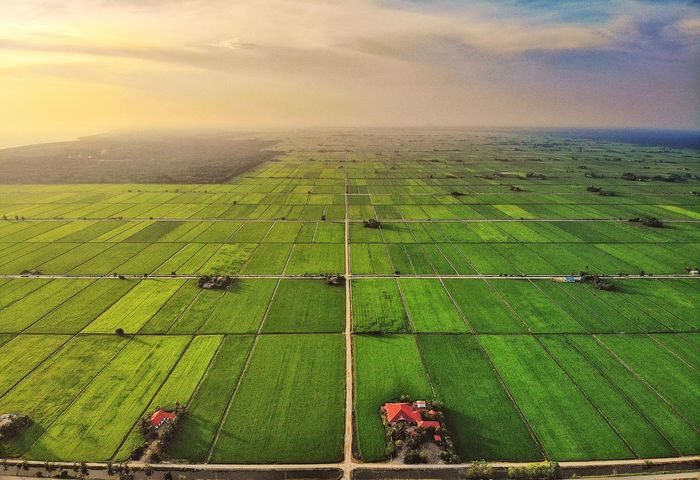 Aerial sunset view of green paddy field Sunset Sunlight View Skyline Outdoor Nature Landscape Aerial View Aerial Shot EyeEm Nature Lover EyeEm Selects Getty Images Rural Scene Agriculture Tree Field High Angle View Crop  Sky Grass Landscape Green Color Cultivated Land Agricultural Field Terraced Field Farmland Plantation Farm Rice Paddy Rice - Cereal Plant