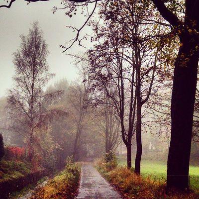 Back to black Freiberg Saxony Sachsen Ig_deutschland Ig_germany Ig_europe Insta_international Insta_europe Nature Fog Fall