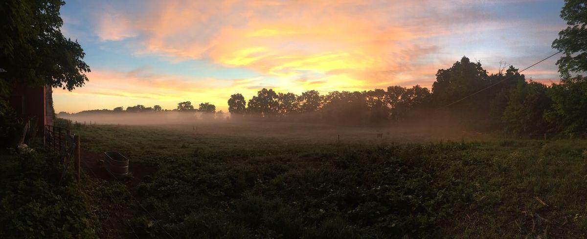 Sunrise Fog Farm Pasture Land Tranquil Scene Beauty In Nature Field Non-urban Scene Panoramic Nature Agriculture