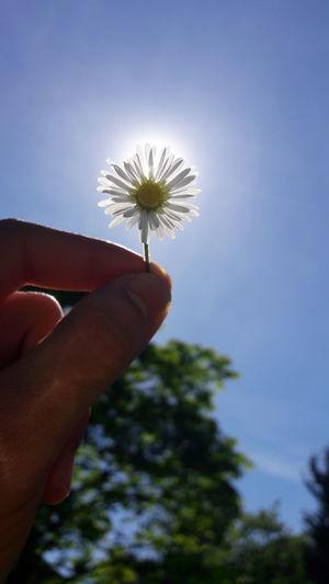 Freshness Foto Giessen GERMANY🇩🇪DEUTSCHERLAND@ Fotografieren Meinstadt Nature Schule School Blumen Sonne