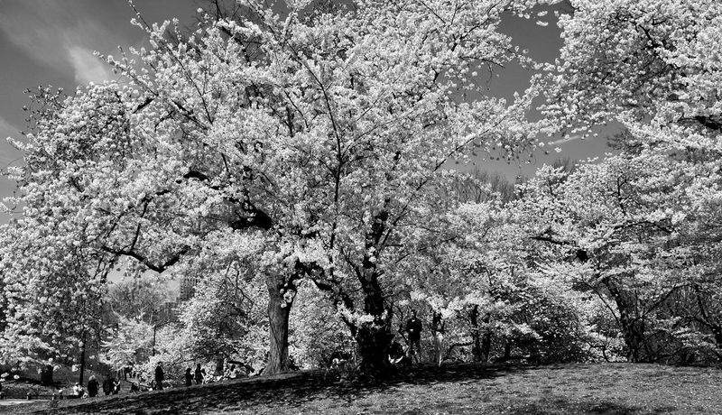 B&w Central Park NYC Photography No People Full Frame Nature Pattern Backgrounds