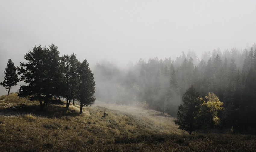 Fog Foggy Morning Foggy Day Foggy Weather Foggy Landscape Forest Yellowstone Yellowstone National Park Wyoming Wyoming Landscape USA Tree Plant Tranquil Scene Tranquility Landscape Beauty In Nature Land Scenics - Nature No People Environment Non-urban Scene Nature Day Outdoors