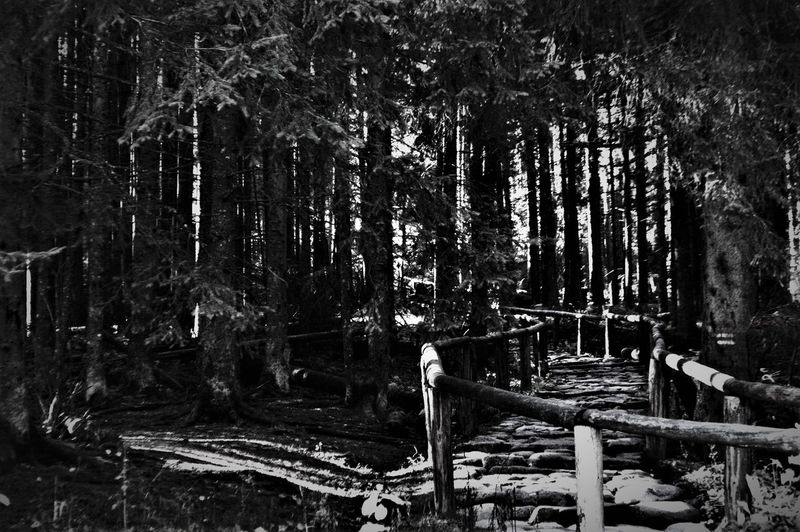 Follow my own way ! Blackandwhite Deep Forest Misterious Nature Ride Secret Single Moment Tranquility Way Be. Ready.