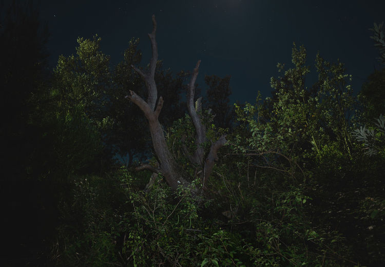 Moon Nights Sydney Longtime Exposure MoonNights Nature Nightphotography Beauty In Nature Bush Dark Blue Darkness And Light Fullmoon Haunting  Landscape Longtimeexposure Moonlight Mysterious Nature Night Night Scenery  Night Sky Nightscape Outdoors Stars Sydney Tree Tree Trunk
