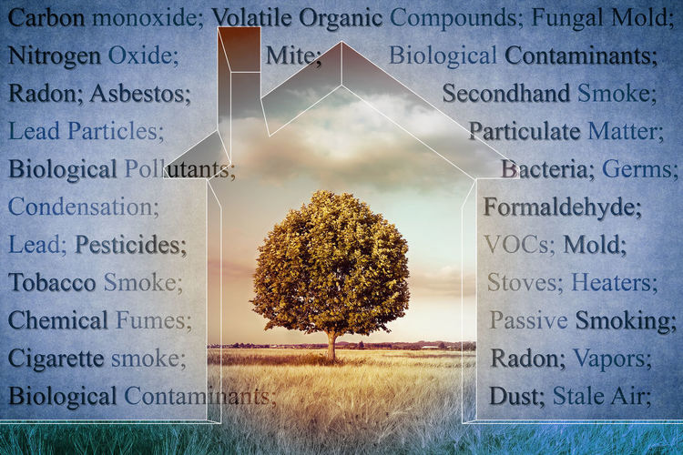 The most common dangerous domestic pollutants we can find in our homes - concept image Domestic Life Beauty In Nature Change Close-up Digital Composite Domestic Pollutants Flower Flowering Plant Fragility Growth Healthcare And Medicine Leaf Medicine Nature No People Outdoors Plant Plant Part Pollutants Sunlight Text Tree