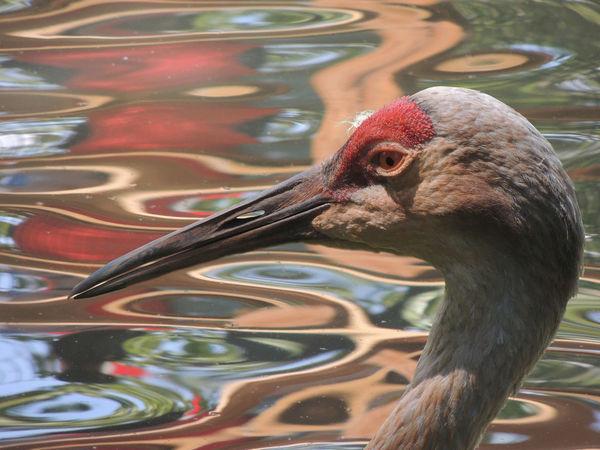 Bird Photography Birds Of EyeEm  Colors Animal Themes Beak Bird Birds Birds_collection Red