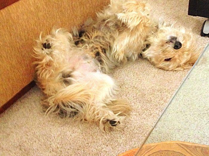 Tango taking a nap
