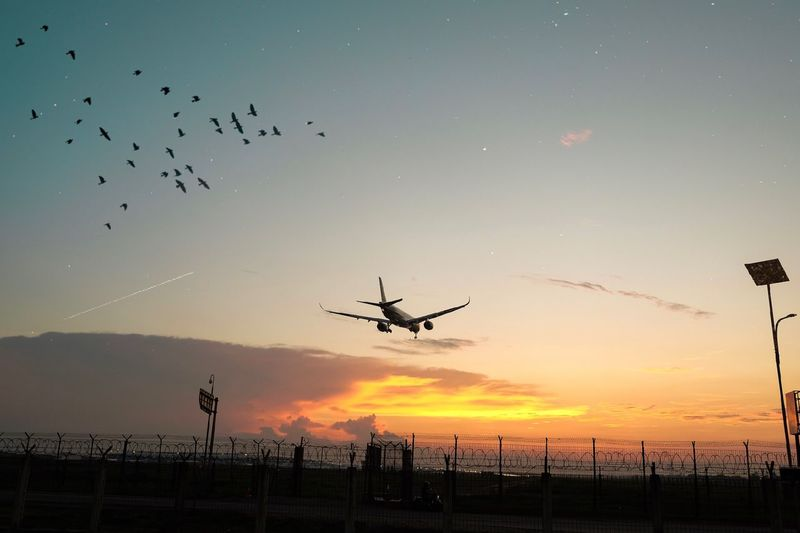 everything about the airport is destination Sky Sunset Flying Mid-air Silhouette Animal Wildlife Animal Themes Animal Bird Animals In The Wild Air Vehicle Transportation Nature Vertebrate Orange Color Airplane No People Group Of Animals Mode Of Transportation Beauty In Nature Aerospace Industry Flight Outdoors