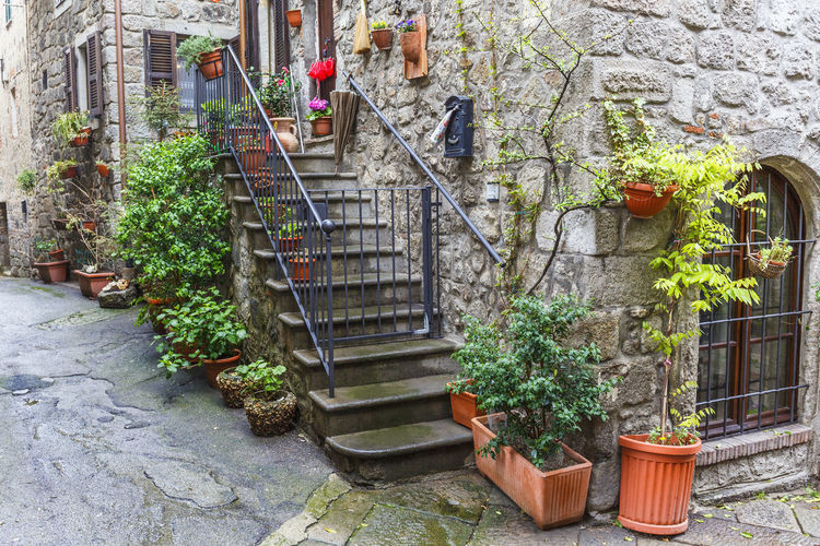 Potted plants on staircase against building
