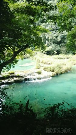 Guatemala Cobán Water Nature Beauty In Nature Green Color Scenics Tranquil Scene Outdoors No People EyeEm Taking Photos Getting Inspired Photooftheday Nature_collection Motivated ♡ Vacationtime Guatemala View River Tranquility Picoftheday Travel Destinations Freetime 👌 Mycamera EyeEm Best Shots