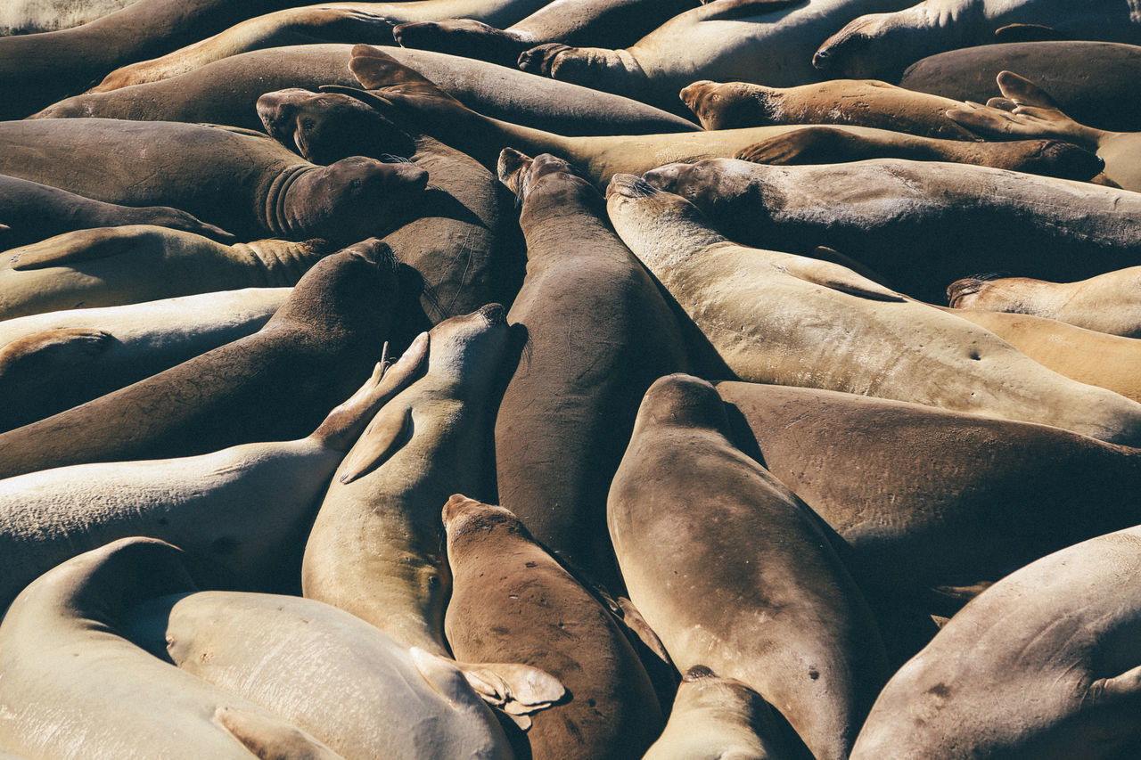 Full frame shot of seals resting in sun